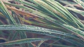 grass-76065