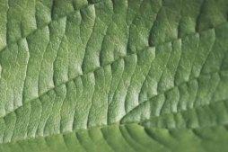 leaf-1992