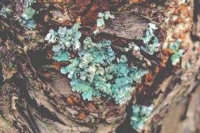 lichen-1043425
