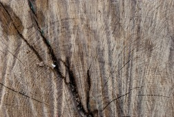 tree-ring-texture-12