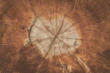wood-1288846